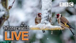Cute wildlife cams UK 28 Jan 🦊❄️🐿 - BBC Winterwatch