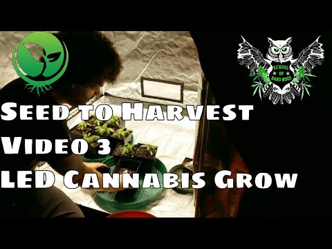 Seed To Harvest Optic 6 LED Garden Update 3: Transplanting And Feeding