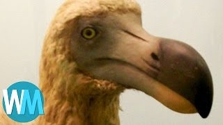Top 10 Colleges - Top 10 Animals That Are Now Extinct Because of Humans
