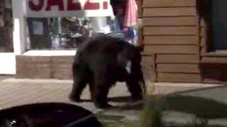 Cop Stops Window-Shopping Bear: