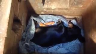 Общая кремация собаки