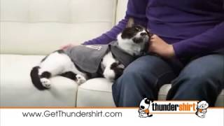 Thundershirt - The Best Dog Anxiety Treatment