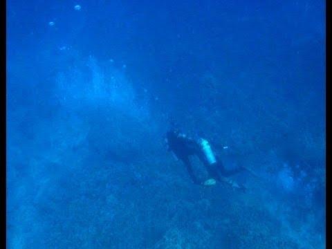 Big Island Hawaii Aquarium Collector Attacks Diver Caught on Video (original)