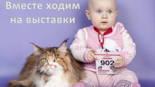 Всемирная выставка кошек, Омск 15-16 апреля  2017