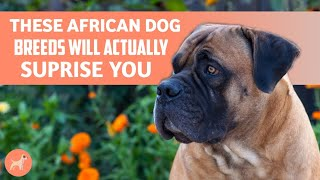 11 African Dog Breeds That You Did Not Know