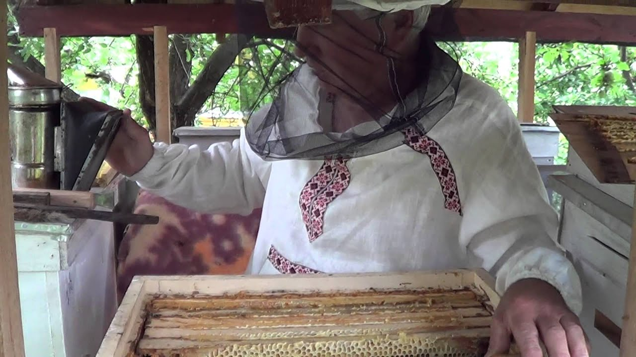 Свойства и рекомендации к применению падевого мёда. Падевый мед значительно гуще цветочного, но если в нем есть примесь цветочного, густота его. Вам предлагают купить ароматный «высококачественный» лесной мед.