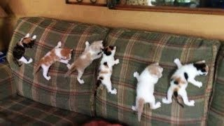 Cute is Not Enough - Funny Cats and Dogs Compilation #100