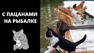 Кот Рыболов Кошачья Рыбалка Приколы с Котами Видео