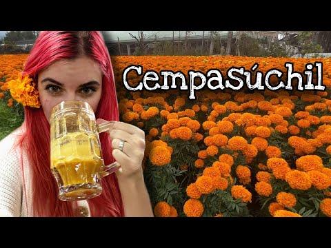 Cempasúchil: Flor de Día de Muertos en Xochimilco | Su producción, venta, pulque