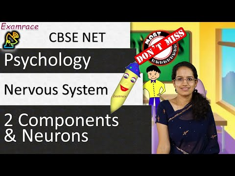 Nervous System: 2 Components and Neurons