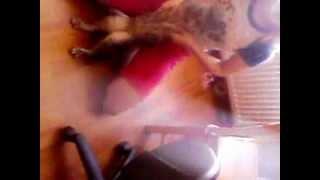 Гангнам стайл кот и человек (извините за плохо