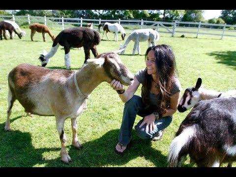 R.I. Spotlight: Refuge for abused animals in Tiverton, RI