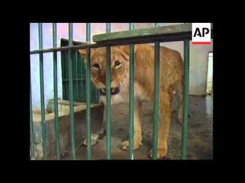 IRAN: BAGHDAD: UN SANCTIONS HIT ZOO