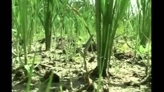 All you need to know about fertilizers, irrigation for paddy cultivation