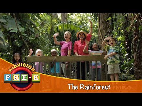 Take a Field Trip to the Rainforest | KidVision Pre-K
