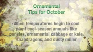 Gardening Tips for October
