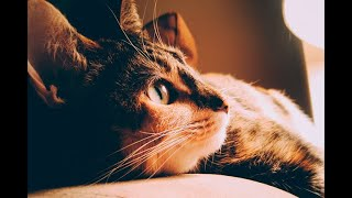 El SIDA en gatos existe: lo que necesita saber | Noticias Caracol