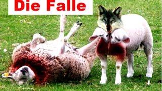 Die Matrix, ihre grösste Falle für uns und die grösste Angst der Wölfe im Schafspelz