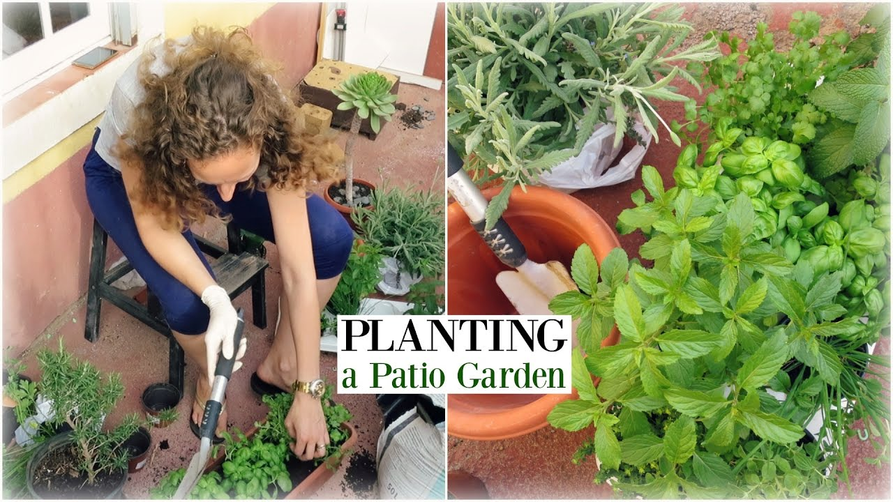 Plant A Patio Garden With Me Starting From Herbs In Pots And Containers