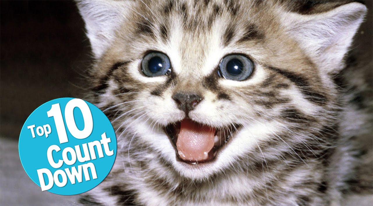 top 10 domesticated cat