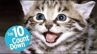 Top 10 Domesticated Cat Breeds