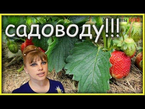 НА ЗАМЕТКУ садоводу, дачнику, огороднику - 5 хитрых советов!!!