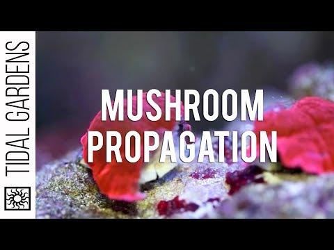 Propagation - Mushrooms