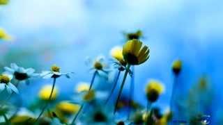 Vojto - Relax 1156 - Tiché kvety - Silent flowers