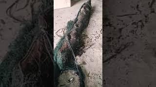 Рыбалка сплавной сетью что может ожидать вас на дне
