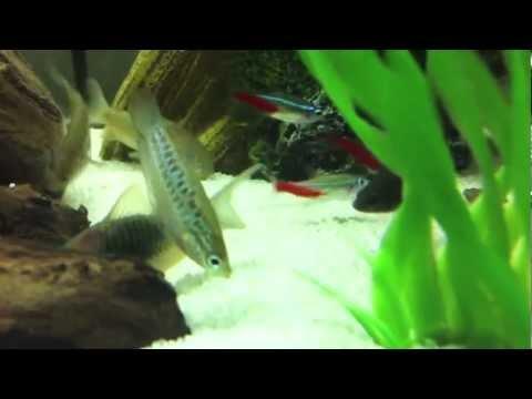 Fish tank feeding clips shrimp betta catfish and more for Feeding betta fish