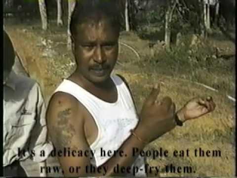 The Headhunters of Borneo