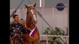 GLOBAL STAR TV P.R.O.HORSE #04 МАСТИ ЛОШАДЕЙ
