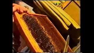 бджільництво, як галузь народного господарства  Загальні відомості про комах та їх значення для люди