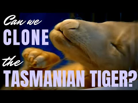 Can We Clone The Tasmanian Tiger? ~ With Professor Andrew Pask