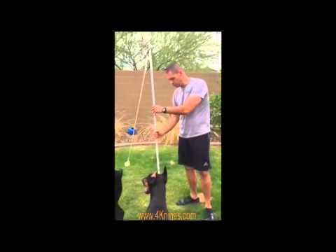 Ares and Ana's Favorite DIY Dog Toy - Видео онлайн