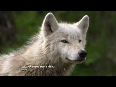4.10. je Mezinárodní den zvířat - CZ promo
