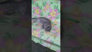 Кошка по имени мура