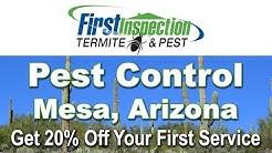 Pest Control Mesa AZ - (480) 778-1480 - Termites
