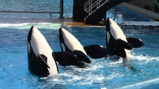 One Ocean (Full Show) SeaWorld San Diego 6/23/14