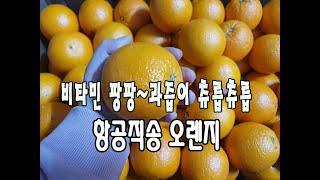 비타민팡팡~ 과즙이 츄릅츄릅 수입과일 오렌지 / 가성비…