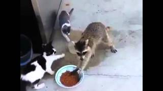This Is So Funny! - Funny videos 2014