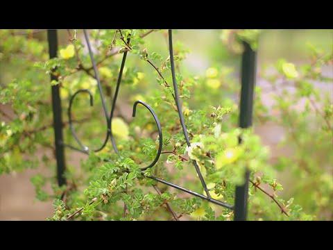 Klettergerüst Rosen : Rankhilfe für rosen youtube