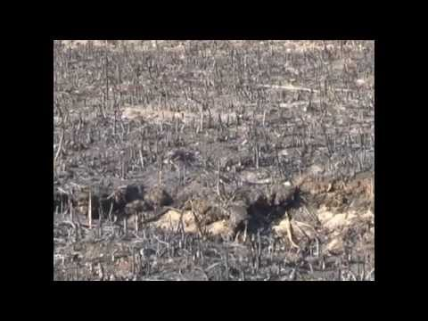 Видео: В Днепропетровском районе не спадает дымовая завеса
