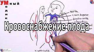 видео Физиологические и анатомические особенности зародыша