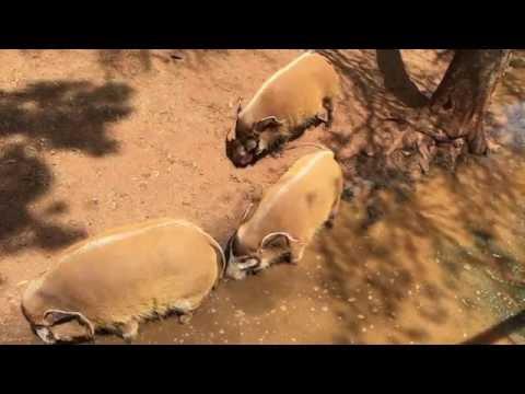 Pretoria  :  Zoo (South Africa - 4K /UHD)