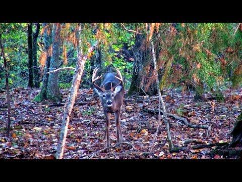Alabama Deer Rut in November!? (Big Buck Down)