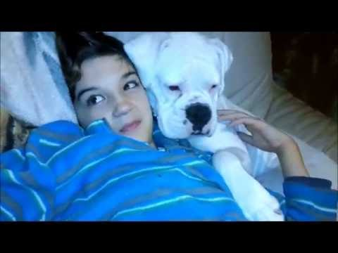 This is how you cuddle your boxer when no one is watching, just admit it. :D
