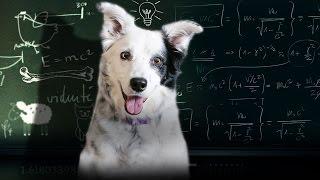 Top Dog | 60 Minutes