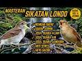 Suara Masteran Sikatan Londo Nembak Rapat Jeda Terapi Air Alam Anti Stres  Mp3 - Mp4 Download