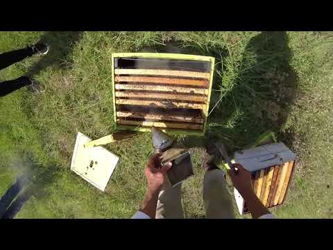 Hive Check   Langstroth Colonies Central Texas June 2016   part 4